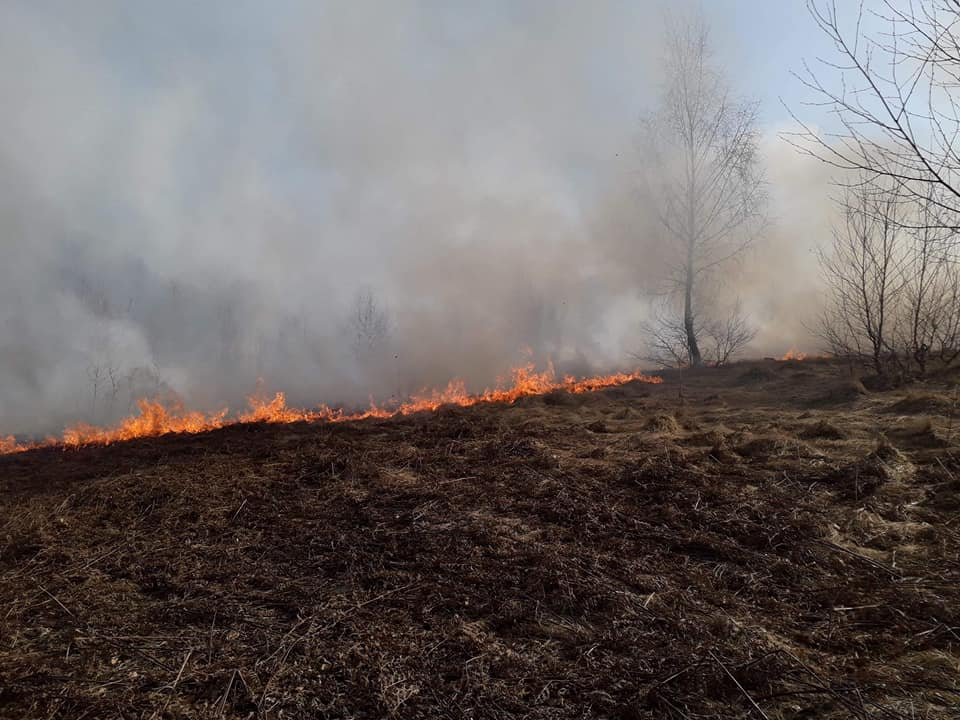 """""""Хто має можливість ідіть на допомогу, там вже багато людей"""", - На Закарпатті масштабна пожежа (Фото, Відео)"""